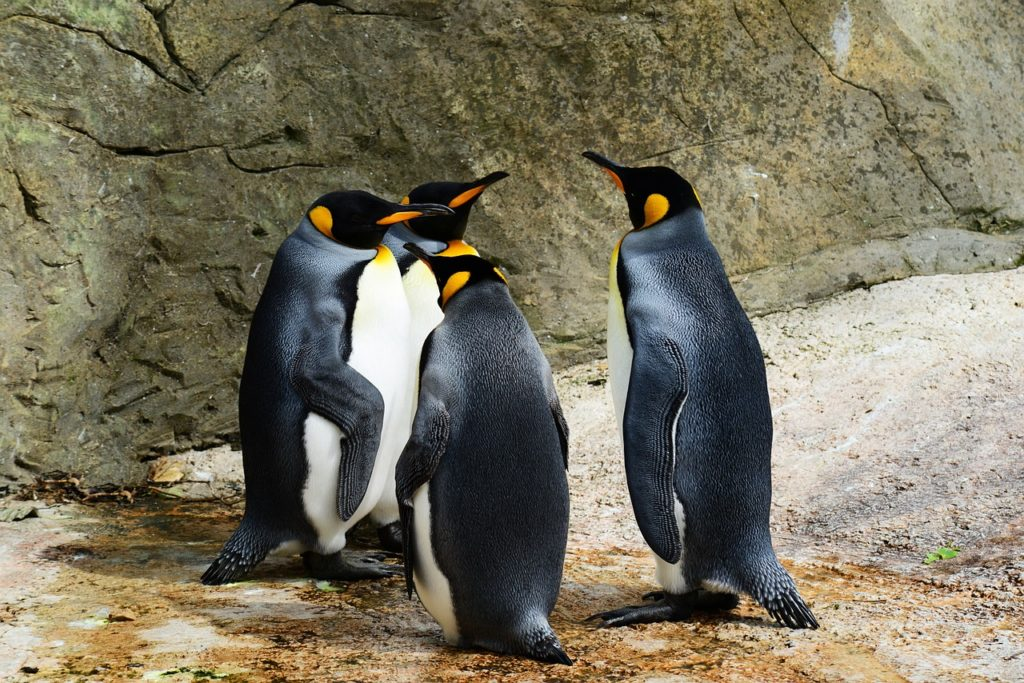 Pinguine Linuxwelt.net